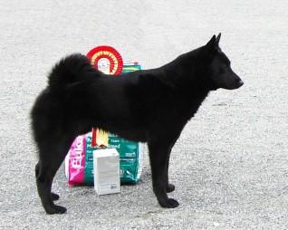 Svarthunden's Falder